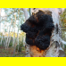 Мицелий Чаги / Березовый гриб (Inonotus obliquus)